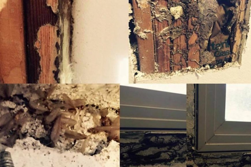 5 FAQs About Termite Control | Houston's Termite Experts