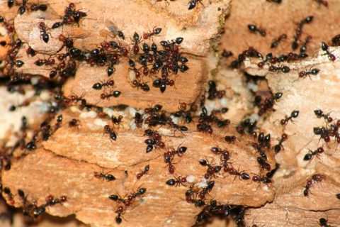 ANTicipating Ants | Cypress Creek Pest Control