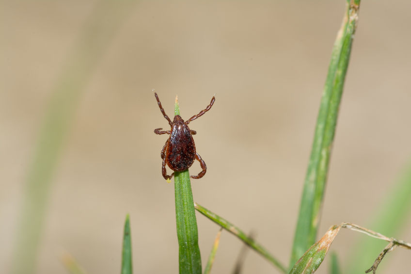 7 Must-Know Facts About Ticks