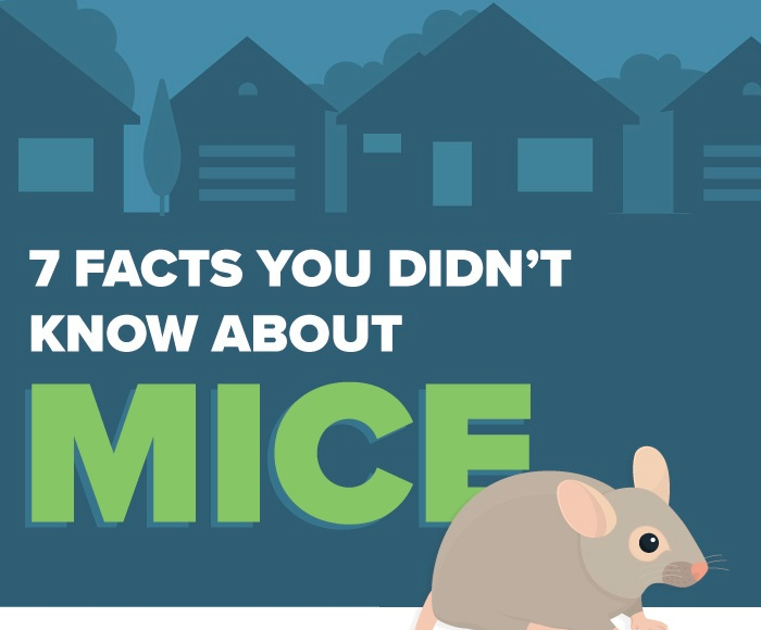 [INFOGRAPHIC] MICE FACT OR FICTION