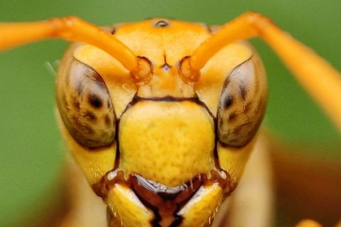 Your Guide To Avoiding Wasp, Bee and Hornet Stings