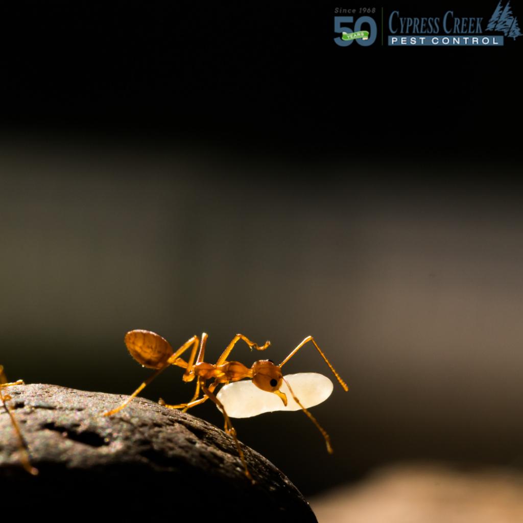 Houston Ant Control