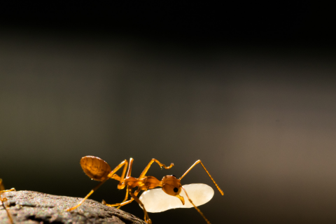 How Strong are Ants? | Houston Ant Control Experts