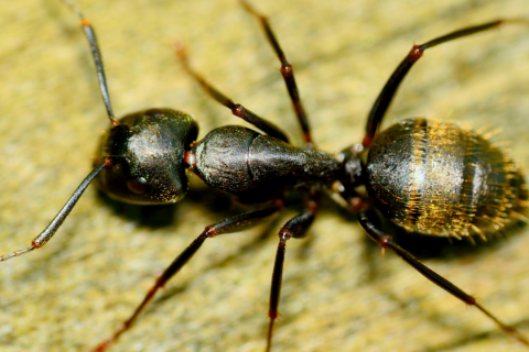 How to Keep Your Kitchen Ant-Free?