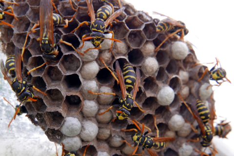 How To Remove A Wasp Nest | Call The Pros!