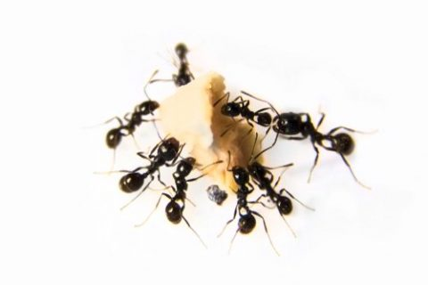 How to Prevent a Summer Ant Infestation