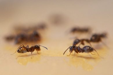 ant-removal-in-houston