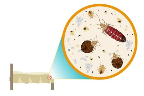 What to Do When You First Notice Bed Bugs