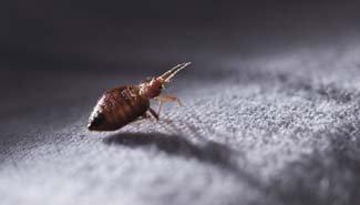 bedbugs-thumb-img