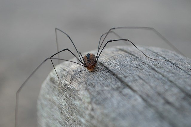 DEBUNKING 8 TOP SPIDER MYTHS