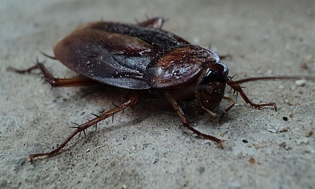 Roaches: Signs to Look For and How They Get In