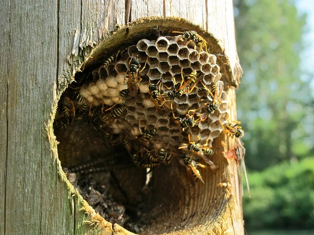 3 Reasons Why You Should Call a Professional for Bee Infestations