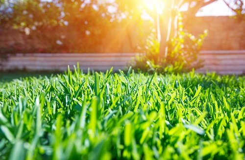 Why Sod Webworms are a Threat to Your Lawn