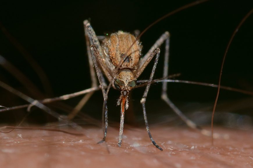 How To Mosquito-Proof Your Yard
