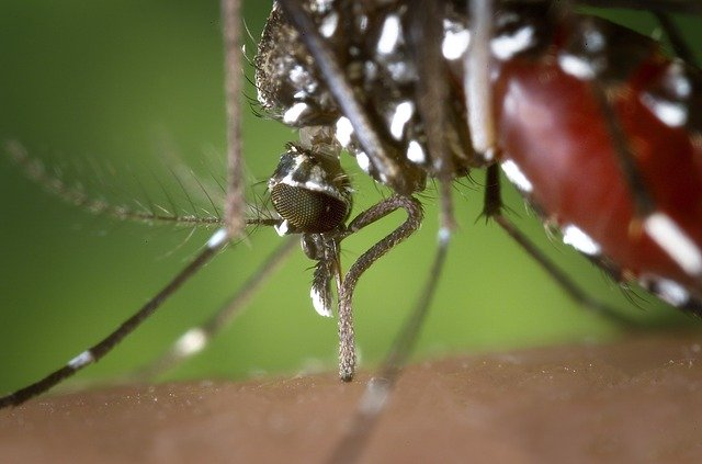 Mosquito Prevention Checklist: What You Need to Know