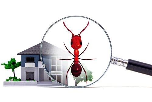 4 Reasons You Shouldn't Do Your Own Houston Pest Control