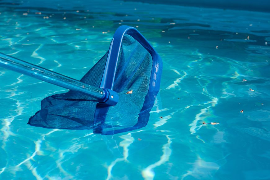 Pest-Proofing Your Pool