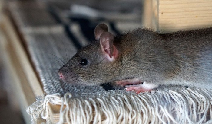 6 WAYS PESTS SNEAK IN DURING THE HOLIDAYS