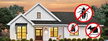 Which Household Pests Inflict Costly Damage To Houston Homes?