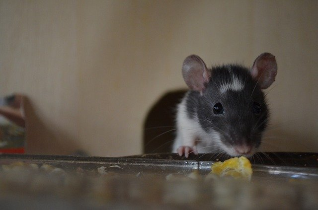 7 FACTS YOU DIDN'T KNOW ABOUT MICE