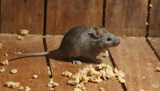 rodents-thumb-img