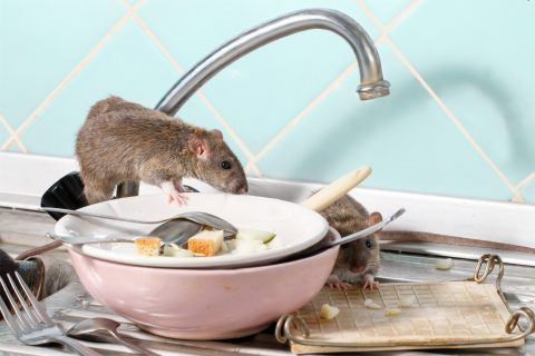 USING PREVENTIVE PEST CONTROL TO KEEP YOUR HOUSTON HOME PEST-FREE