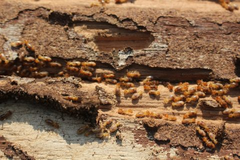 Spring Is The Beginning Of The Termite Season | Houston Termite Control Company