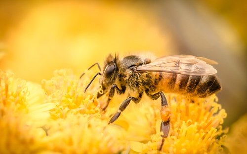 Stinging Insects & What to Do if You're Stung