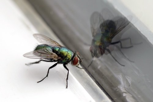 HOW TO KEEP FLIES OUT OF THE OFFICE