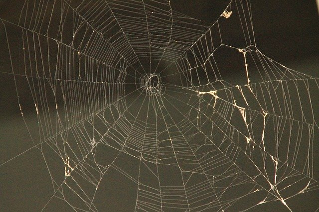 TIPS FOR SPIDER PROOFING YOUR HOME