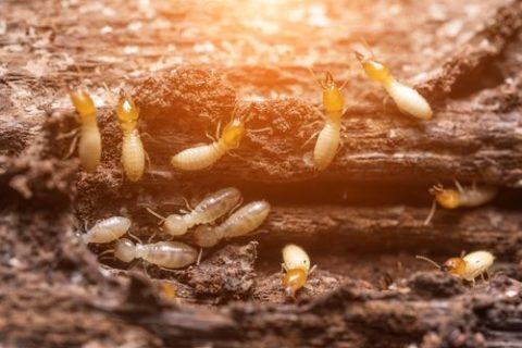 The Noisy Termites