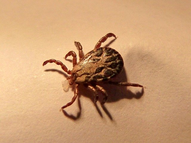 8 FACTS YOU DIDN'T KNOW ABOUT TICKS