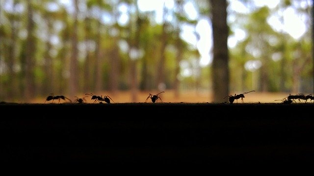 Where Do Ants Hide Out & How Do They Get In Your House?