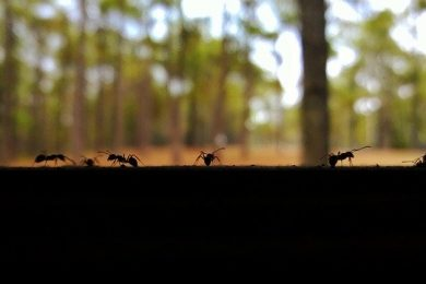 where-ants-hang-out