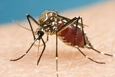 Zika Virus: Mosquitoes Pose a New Threat to Pregnant Women